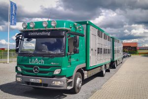 Viehtransporter-Zug